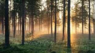 foresta Lapponia