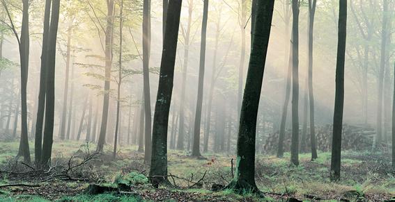 forestaNordica