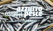 cesenatico5