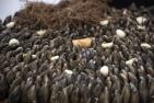 connemara-mussel-festival-14