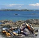 connemara-mussel-festival-18