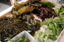 connemara-mussel-festival-f