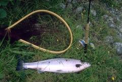 pesca11