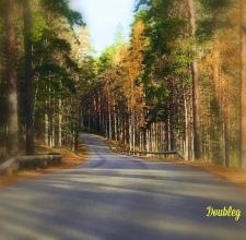 Finlandia - natura 4