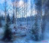 Finlandia - prima neve